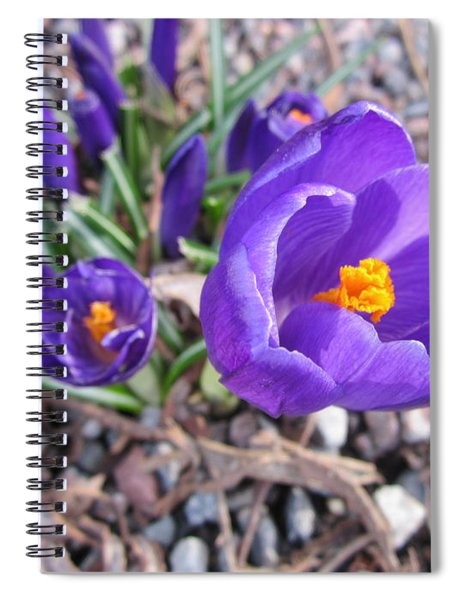 Crocus Sativus Spiral Notebook