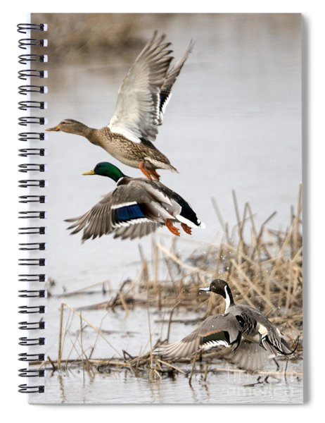 Crowded Flight Pattern Spiral Notebook