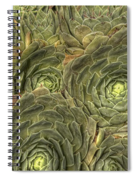 Crowded Pot Of Hens And Chicks Spiral Notebook