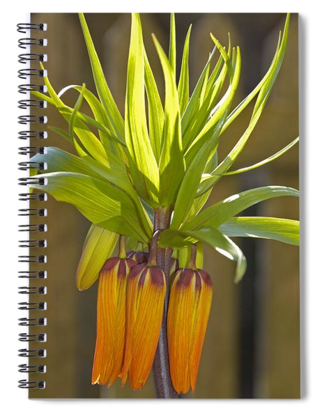 Crown Imperial Fritillaria Imperialis Flower Spiral Notebook