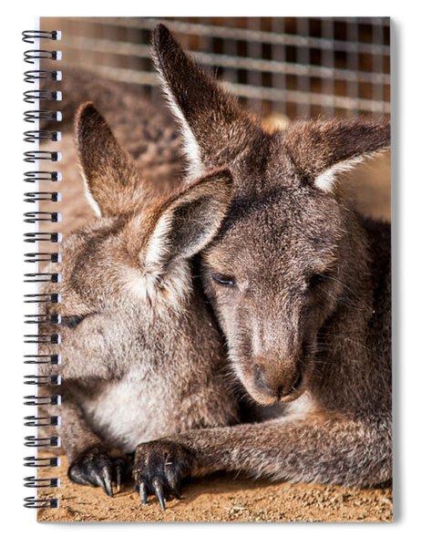 Cuddling Kangaroos Spiral Notebook