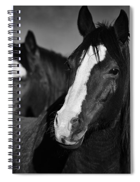 Curious Horses Spiral Notebook