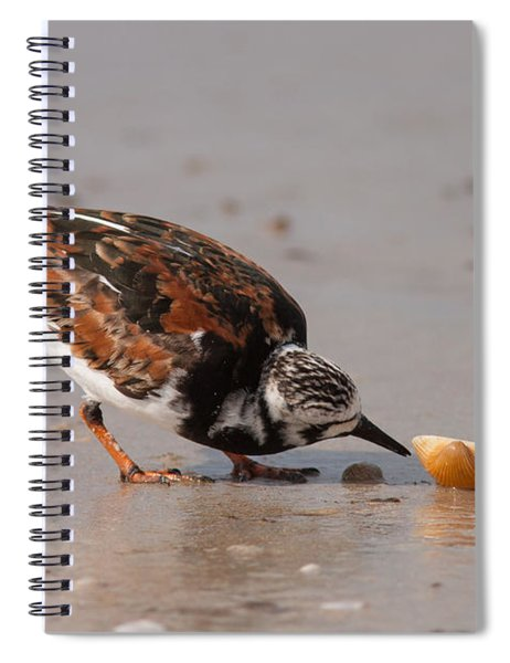 Curious Turnstone Spiral Notebook