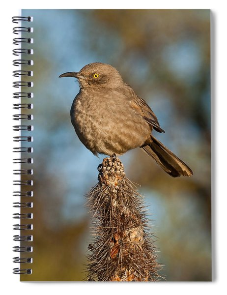 Curve-billed Thrasher On A Cactus Spiral Notebook