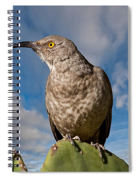Curve-billed Thrasher On A Prickly Pear Cactus Spiral Notebook
