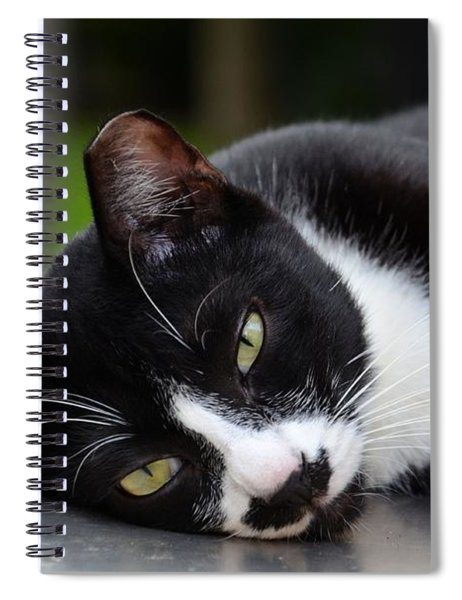 Cute Black And White Tuxedo Cat With Nipped Ear Rests  Spiral Notebook
