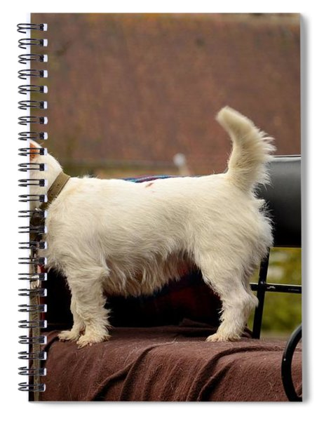 Cute Dog On Carriage Seat Bruges Belgium Spiral Notebook