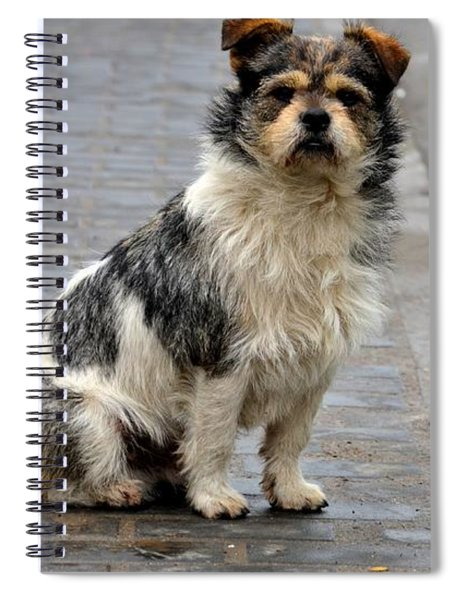 Cute Dog Sits On Pavement And Stares At Camera Spiral Notebook