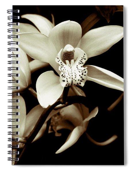 Cymbidium Orchids Spiral Notebook