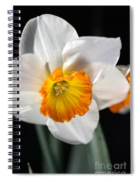 Daffodil In White Spiral Notebook