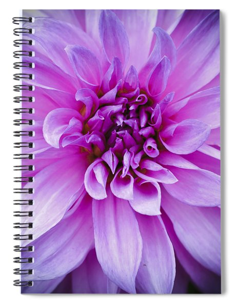 Dahlia Dahling Spiral Notebook