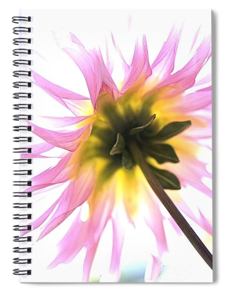 Dahlia Flower Spiral Notebook