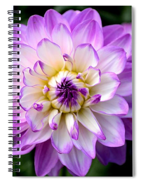 Dahlia Flower With Purple Tips Spiral Notebook