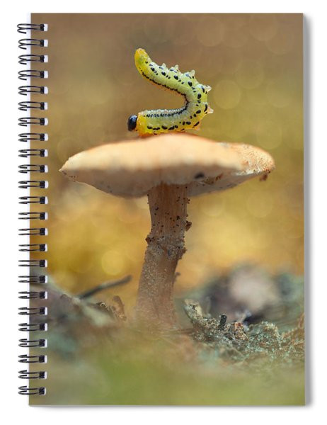 Daily Excercice Spiral Notebook