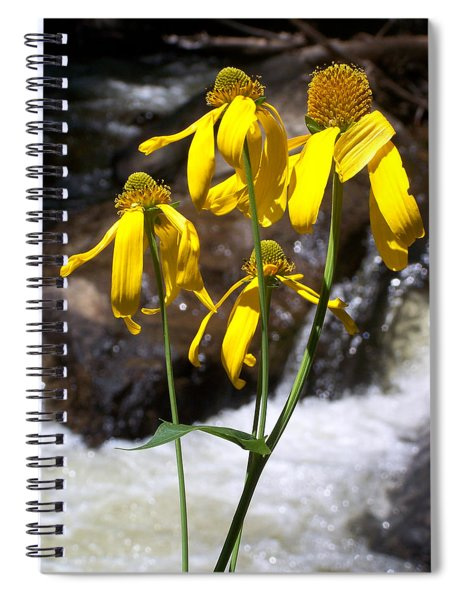 Daisies Near The Water  Spiral Notebook