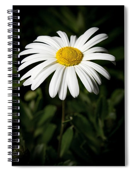 Daisy In The Garden Spiral Notebook