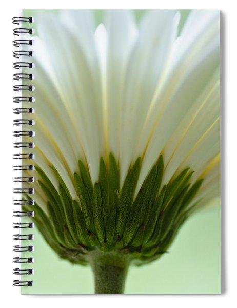 Daisy Sweetness Spiral Notebook