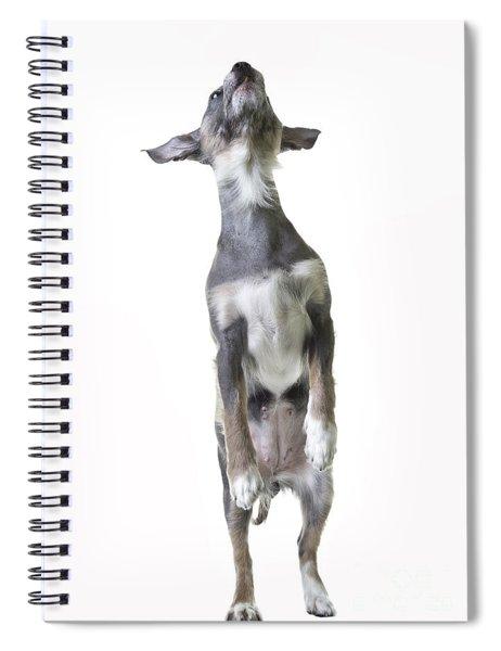 Dancing Dog Spiral Notebook