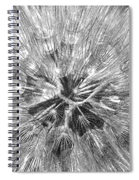Dandelion Fireworks In Black And White Spiral Notebook