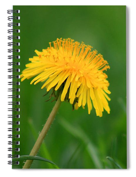 Dandelion Flower Spiral Notebook