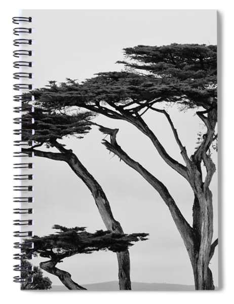 Dark Cypress Spiral Notebook