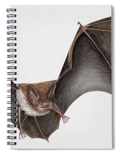 Daubentons Bat Myotis Daubentonii - Murin De Daubenton-murcielago Ribereno-vespertilio Di Daubenton Spiral Notebook
