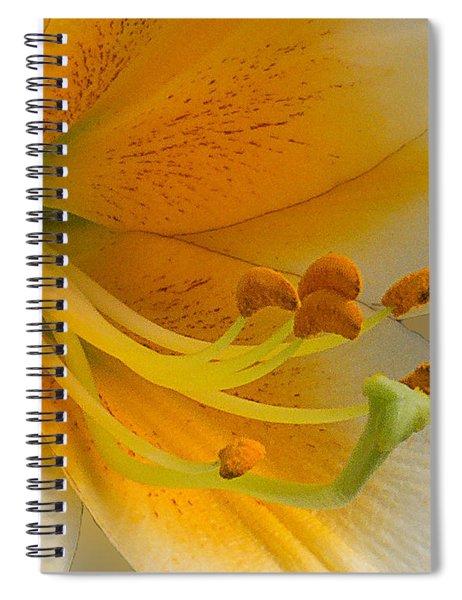 Gold Daylily Close-up Spiral Notebook