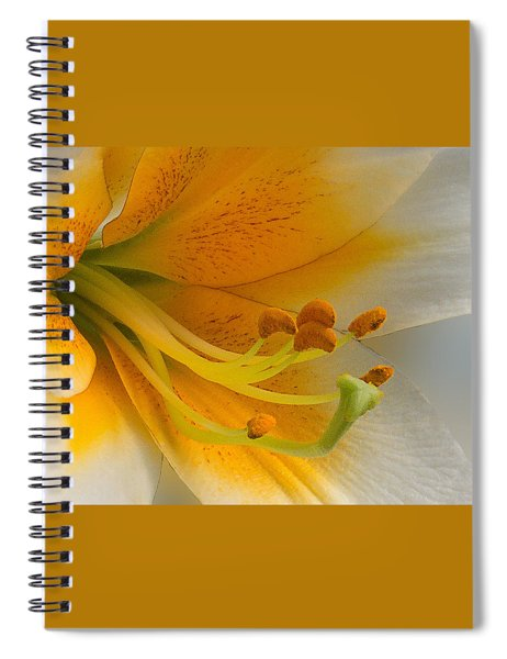 Spiral Notebook featuring the photograph Gold Daylily Close-up by Patti Deters