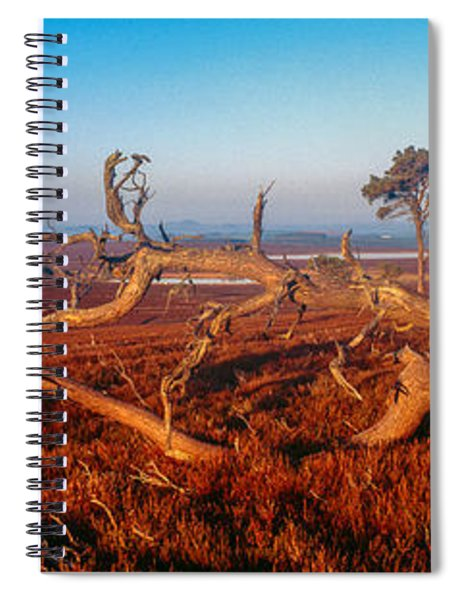 Dead Trees, Southern Uplands Spiral Notebook
