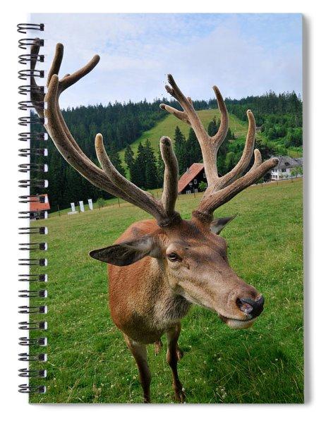 Deer Cervidae With Impressive Antlers Spiral Notebook
