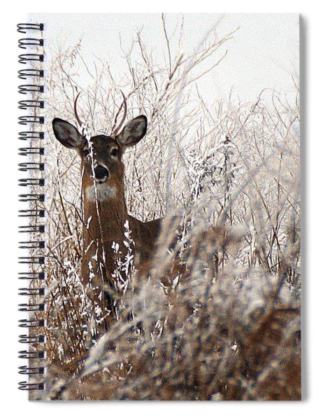 Deer In Winter Spiral Notebook