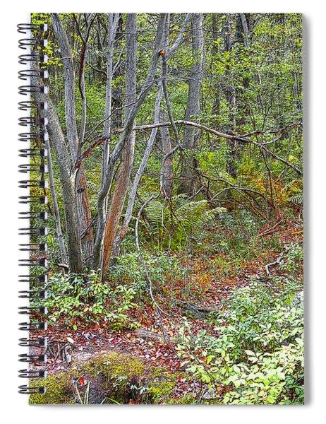 Deer Trail Early Autumn Pocono Mountains Pennsylvania Spiral Notebook
