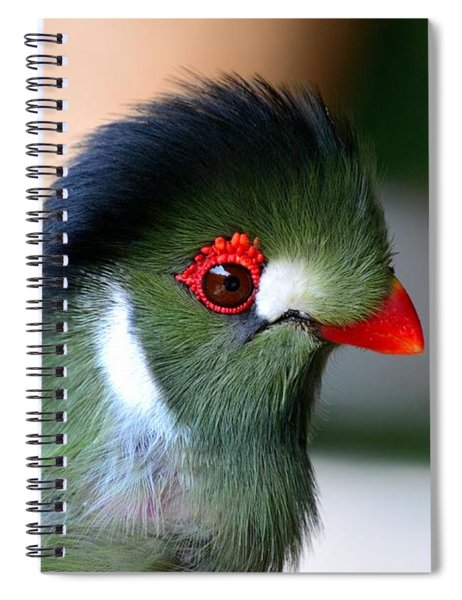 Delicate Green Turaco Bird With Red Beak White Patches And Black Crown Spiral Notebook