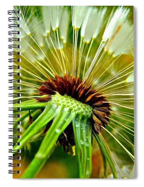 Delightful Dandelion Spiral Notebook