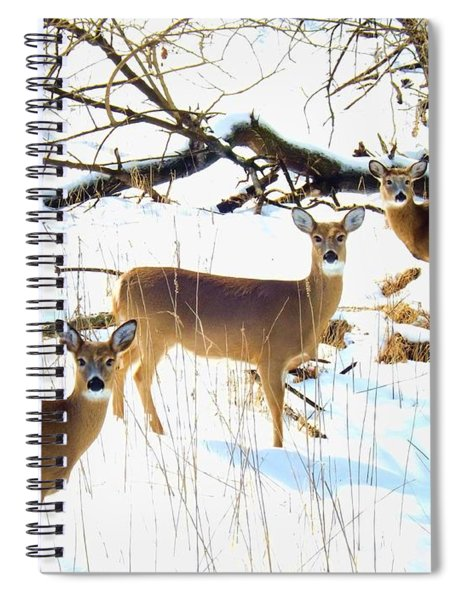 Does In The Snow Spiral Notebook