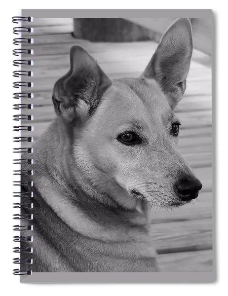 Dog In Black And White One Spiral Notebook