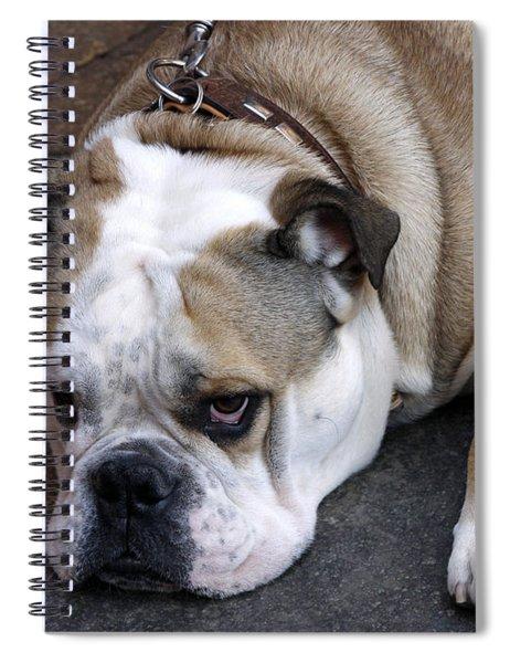 Dog. Tired. Spiral Notebook