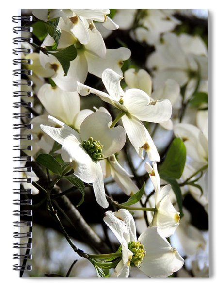 Dogwoods In The Spring Spiral Notebook