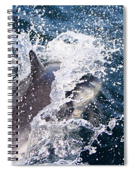 Dolphin Splash Spiral Notebook