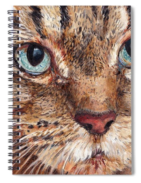 Domestic Tabby Cat Spiral Notebook