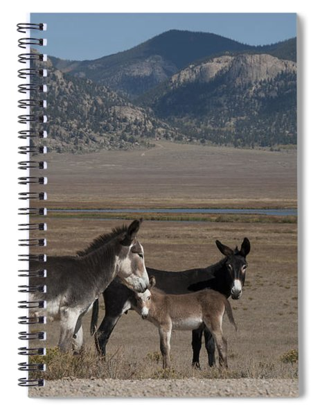 Donkeys In The Colorado Rockies Spiral Notebook