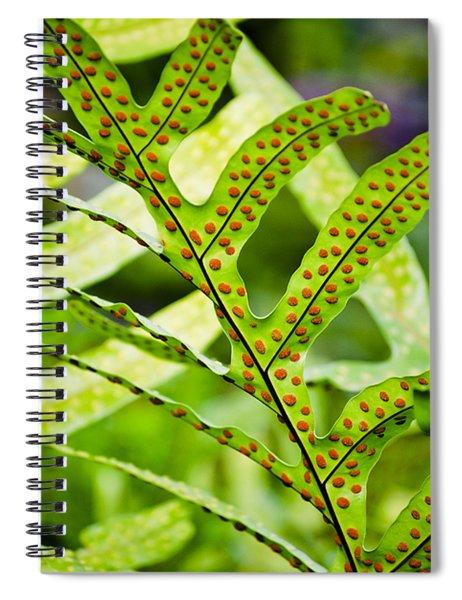 Dotty Spiral Notebook