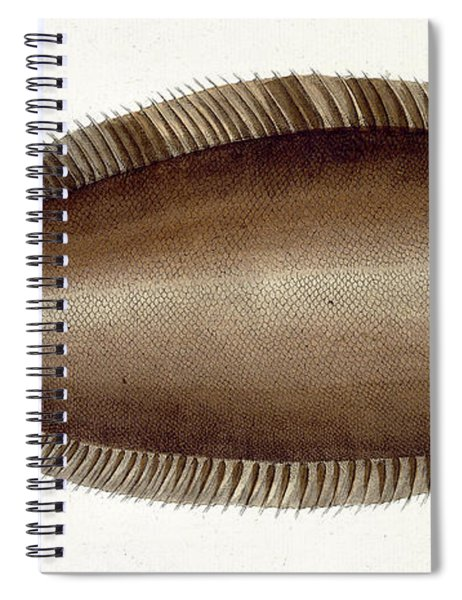 Dover Sole Spiral Notebook