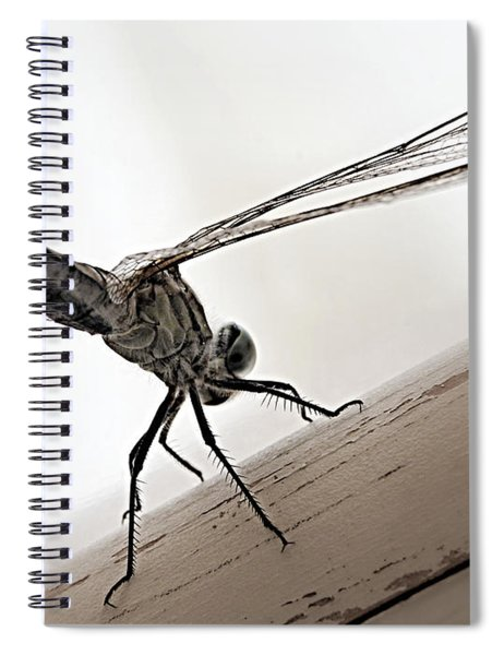 Dragon Of The Air  Spiral Notebook