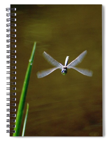 Dragonflight Spiral Notebook