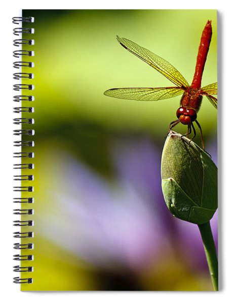 Dragonfly Display Spiral Notebook