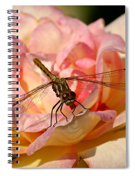 Dragonfly On A Rose Spiral Notebook