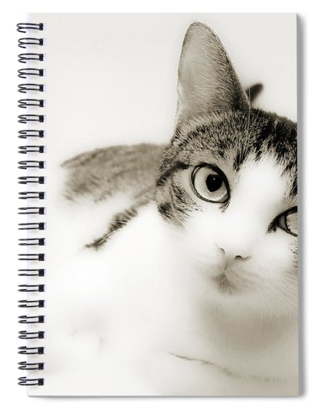 Dreamy Cat 2 Spiral Notebook