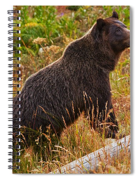 Dunraven Grizzly Spiral Notebook