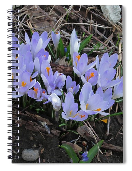 Early Crocuses Spiral Notebook